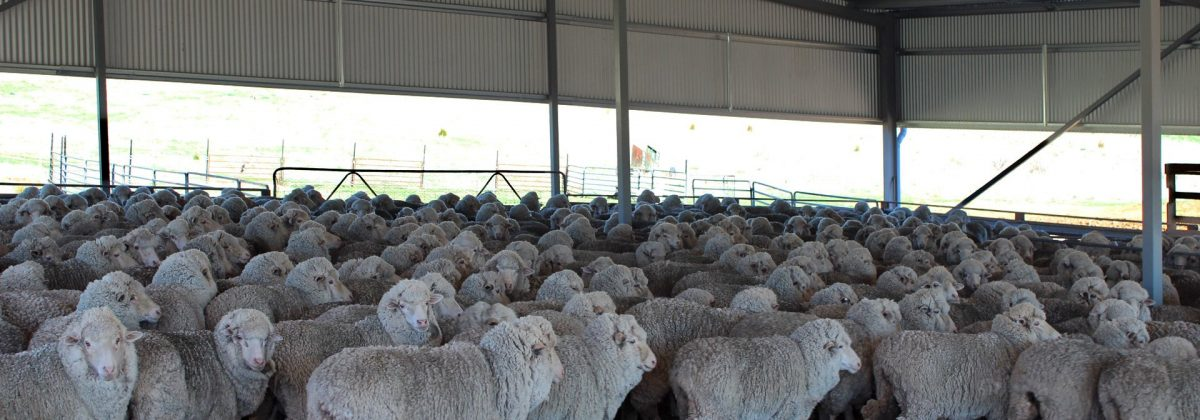 Shearing shed by Akura