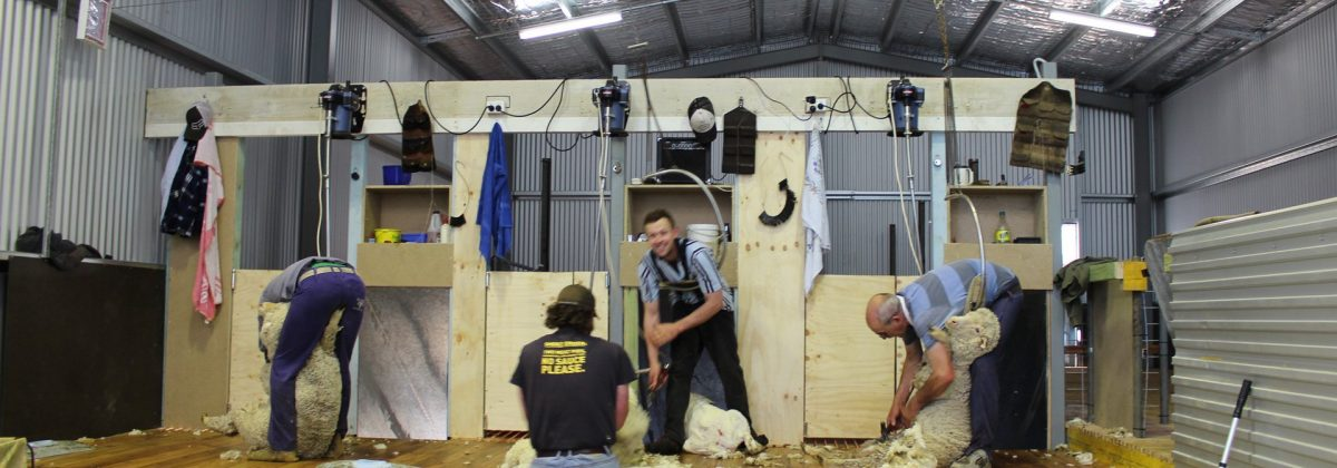 Sinclairs Shearing Shed Wallandra design and construct